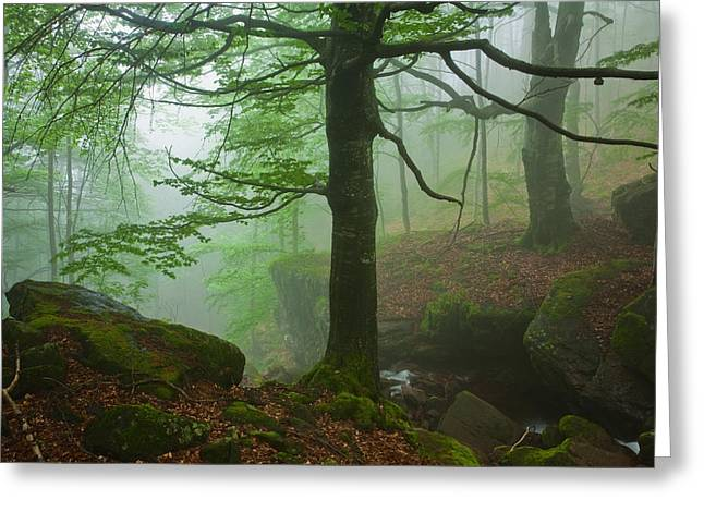 Fog Greeting Cards - Dark Forest Greeting Card by Evgeni Dinev
