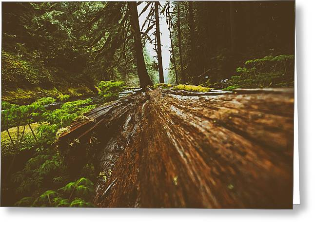 Moist Greeting Cards - Deep in the Forest Greeting Card by Robert Servais