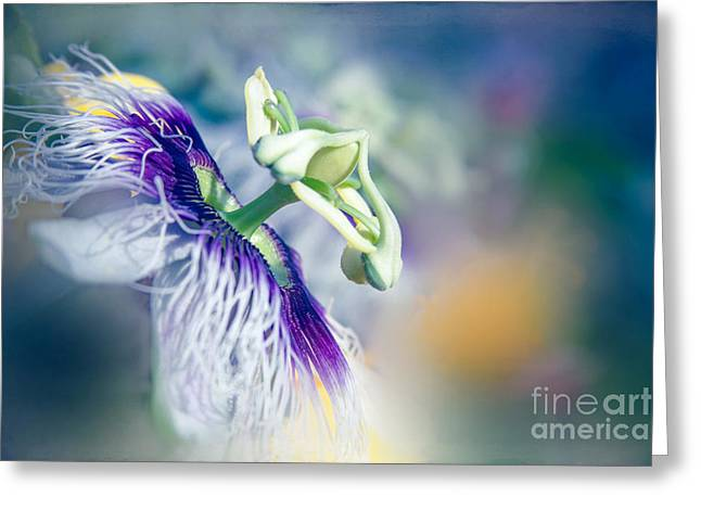 Passiflora Greeting Cards - Destination Sunshine Greeting Card by Sharon Mau