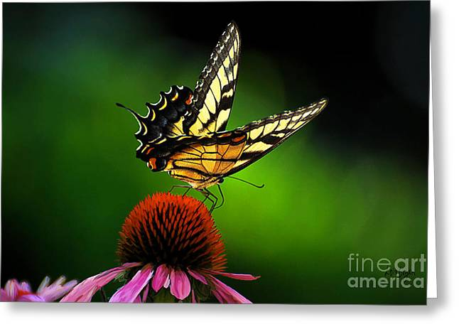 Swallowtail Butterflies Greeting Cards - Dining Alone Greeting Card by Lois Bryan