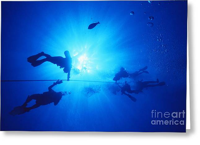 Anchor Underwater Greeting Cards - Diver On Mahi Wreck Greeting Card by Bob Abraham - Printscapes