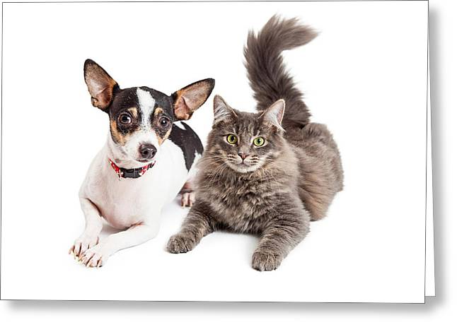 Short Hair Greeting Cards - Dog and Cat Laying Together Looking Forward Greeting Card by Susan  Schmitz