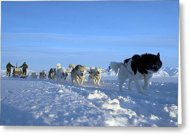 Arctic Dogsledge Patrol Greeting Cards - Dogsledge, Northern Greenland Greeting Card by Louise Murray