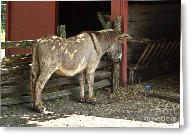 Barnyard Greeting Cards - Donkey in barn Greeting Card by Blink Images