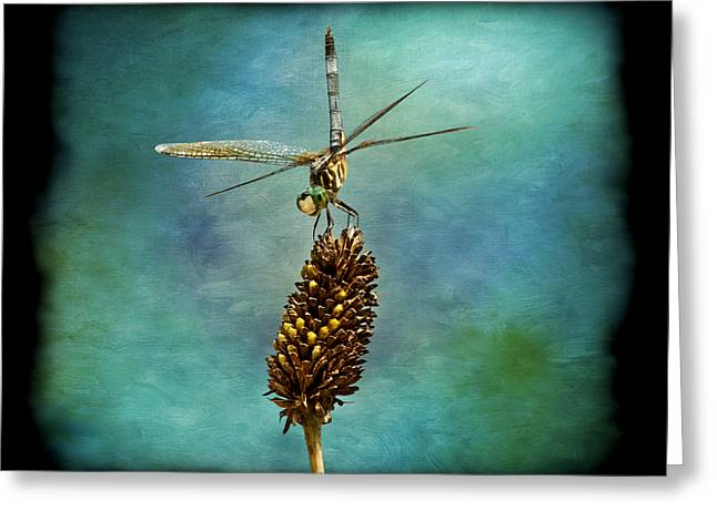 Blue And Green Greeting Cards - Dragon Fly Greeting Card by Steven  Michael