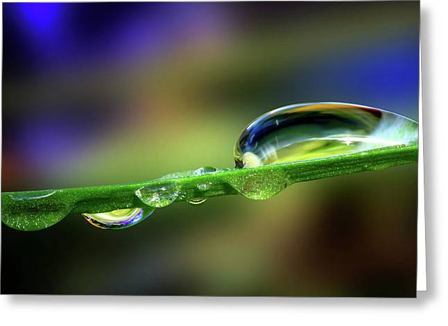 Drop Of Green Greeting Card by Gary Yost