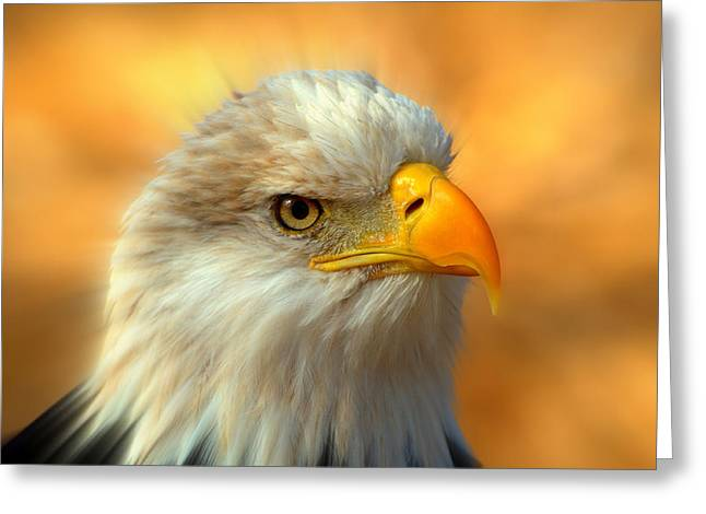Marty Koch Photographs Greeting Cards - Eagle 10 Greeting Card by Marty Koch