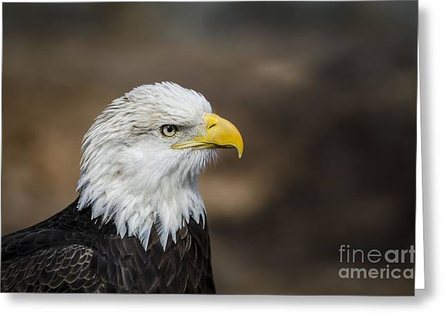 Andrea Silies Greeting Cards - Eagle Profile Greeting Card by Andrea Silies