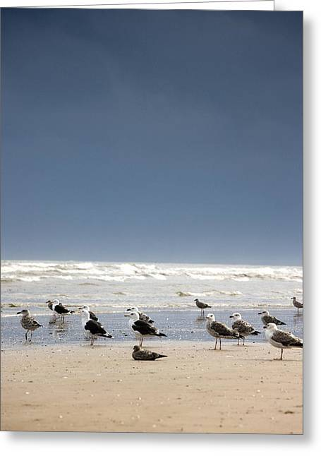 Seabirds Greeting Cards - East Riding, Yorkshire, England Rusty Greeting Card by John Short
