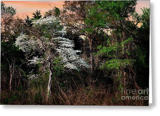 Easter Dogwood Greeting Card by Tamyra Ayles