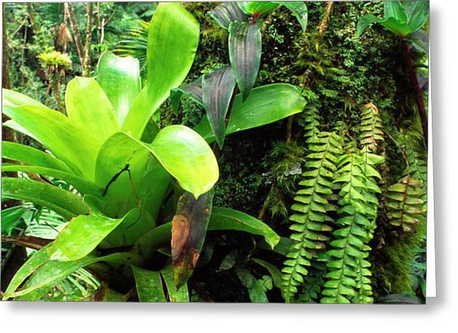 El Yunque National Forest Greeting Card by Thomas R Fletcher