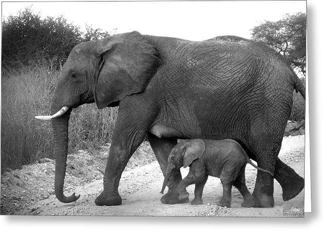 Mothers Day Greeting Cards - Elephant Walk Black and White  Greeting Card by Joseph G Holland