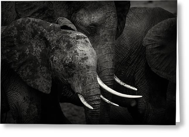Elephant Greeting Cards - Elephants Greeting Card by Pekka Jarventaus