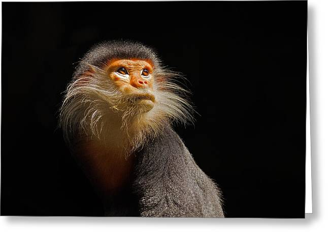 Whiskers Greeting Cards - Enlightenment Greeting Card by Ashley Vincent