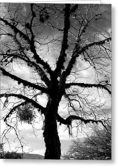 Ent Photographs Greeting Cards - Ent Greeting Card by Terry Rogers
