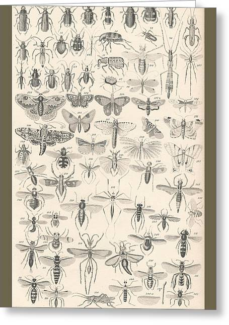 Stinger Greeting Cards - Entomology Greeting Card by Captn Brown
