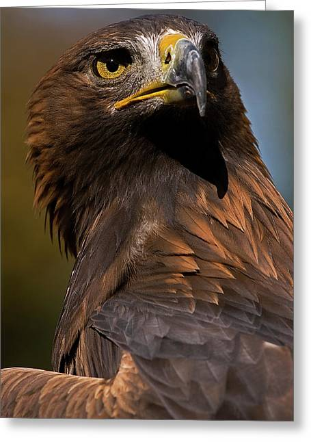 Skyhunter Greeting Cards - European Golden Eagle Greeting Card by JT Lewis