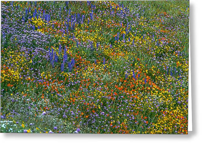 Reserve Greeting Cards - Explosion of Color Greeting Card by Howie Garber