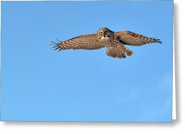 Saw Greeting Cards - Eye-contact with the Great Gray Owl in-flight Greeting Card by Asbed Iskedjian