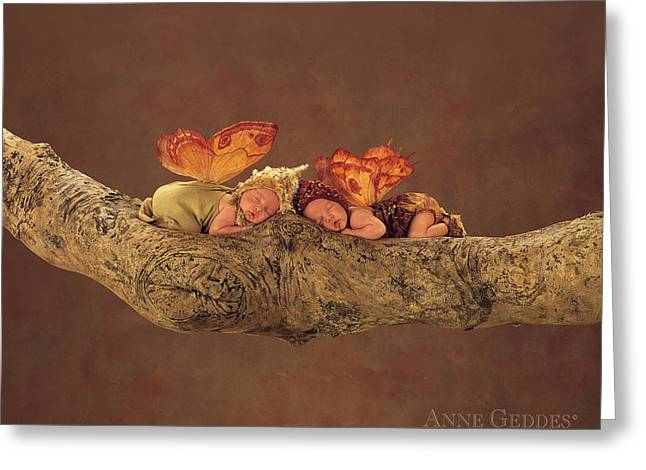 Fairy Greeting Cards - Fairies Greeting Card by Anne Geddes