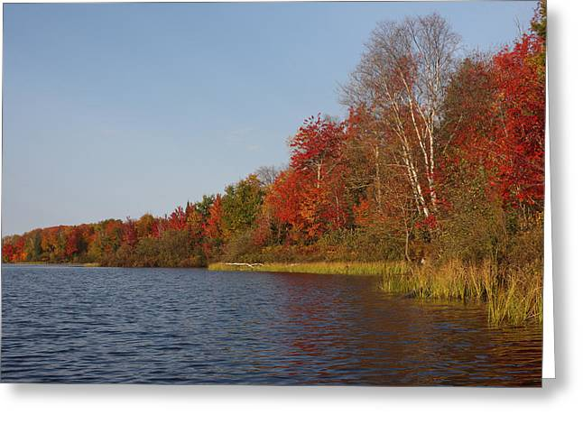 Woodland Scenes Greeting Cards - Fall colors on a lake Greeting Card by Mark Wallner