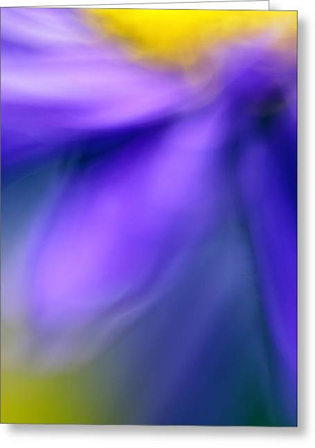Decorativ Photographs Greeting Cards - Fall Flower Greeting Card by Silke Magino