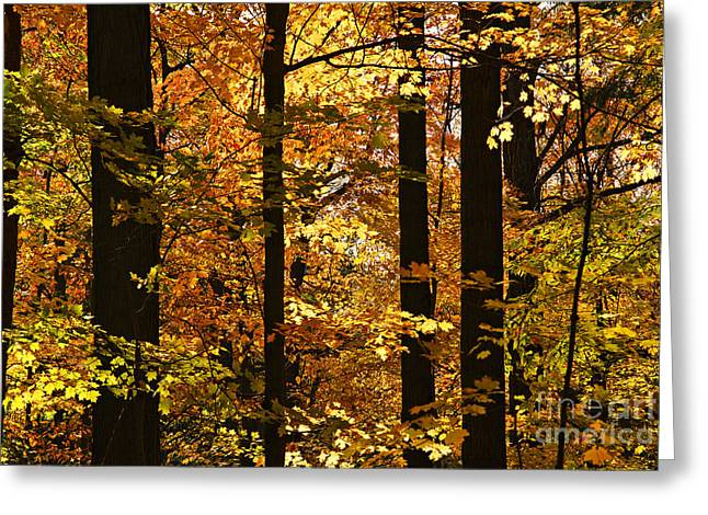 Ecology Greeting Cards - Fall forest Greeting Card by Elena Elisseeva