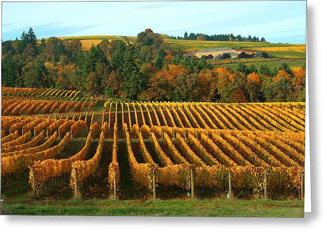 Red Wine Greeting Cards - Fall in a Vineyard Greeting Card by Margaret Hood