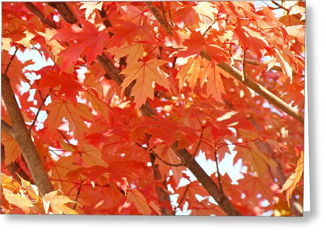 Autumn Art Greeting Cards - FALL TREES Colorful Autumn Leaves Art Baslee Troutman Greeting Card by Baslee Troutman