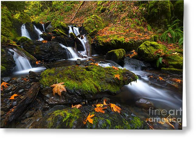 Fallen Along The Way Greeting Card by Mike Dawson