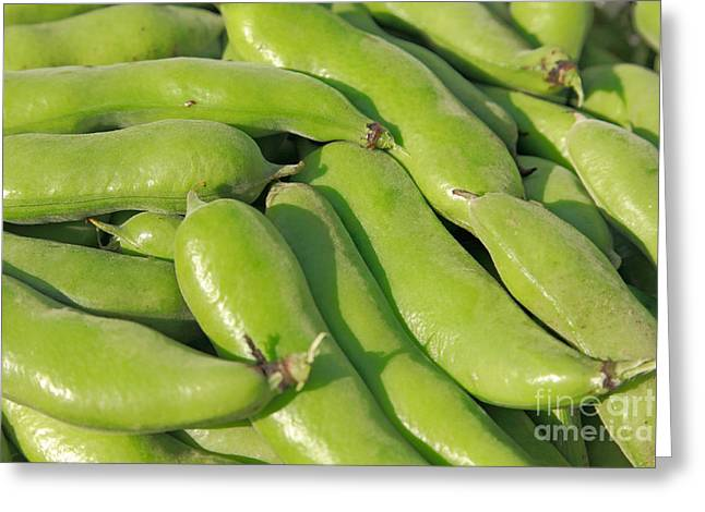 Plant Life Digital Greeting Cards - Fava bean pods Greeting Card by Gaspar Avila