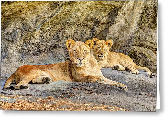 Female Lion And Cub Greeting Card by Marv Vandehey