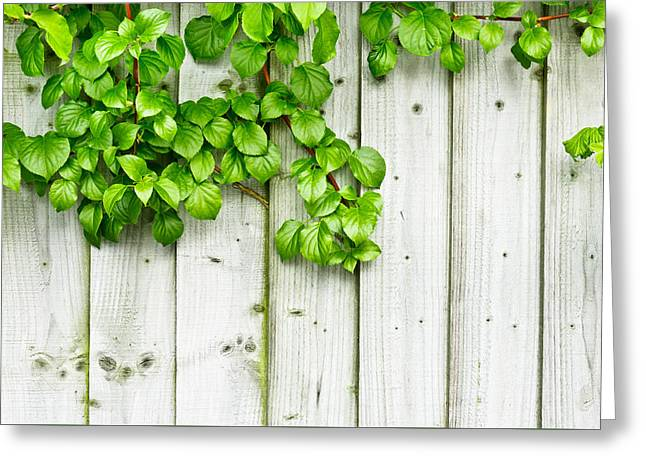 Creepers Greeting Cards - Fence background  Greeting Card by Tom Gowanlock