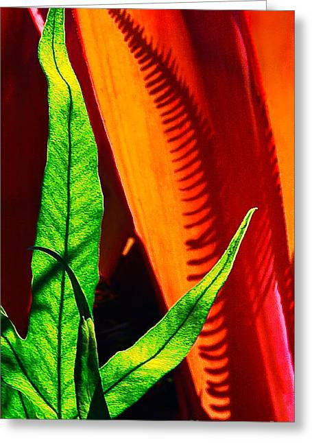 Fern And Shadow Greeting Card by Frank Wicker