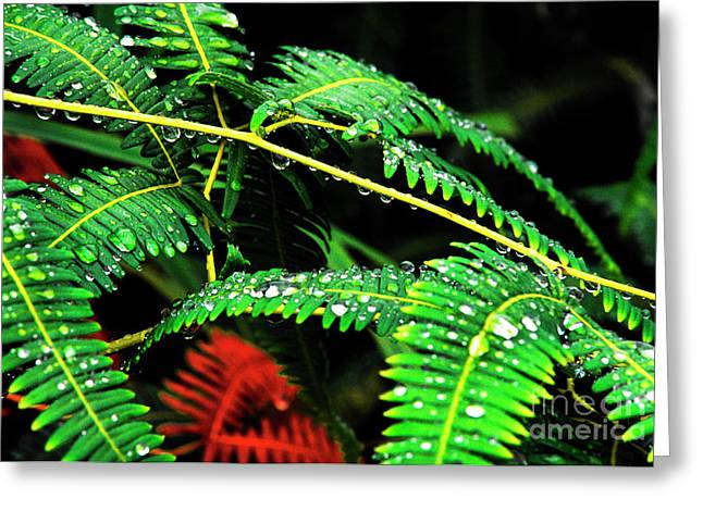 Yunque Greeting Cards - Ferns and Raindrops Greeting Card by Thomas R Fletcher