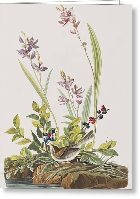Sparrow Greeting Cards - Field Sparrow Greeting Card by John James Audubon