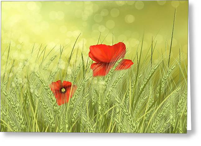Poppy Decorations Greeting Cards - Field Greeting Card by Veronica Minozzi