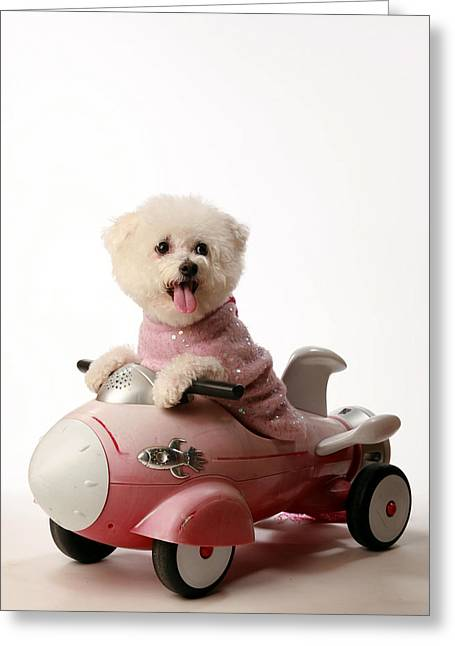 Mikeledray Greeting Cards - Fifi loves her rocket car  Greeting Card by Michael Ledray