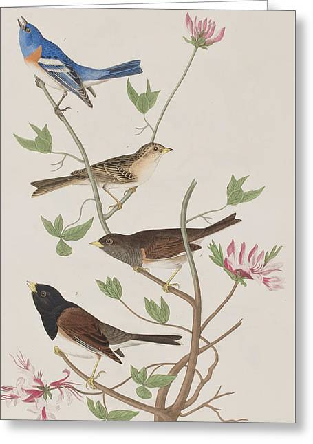 Finches Greeting Card by John James Audubon
