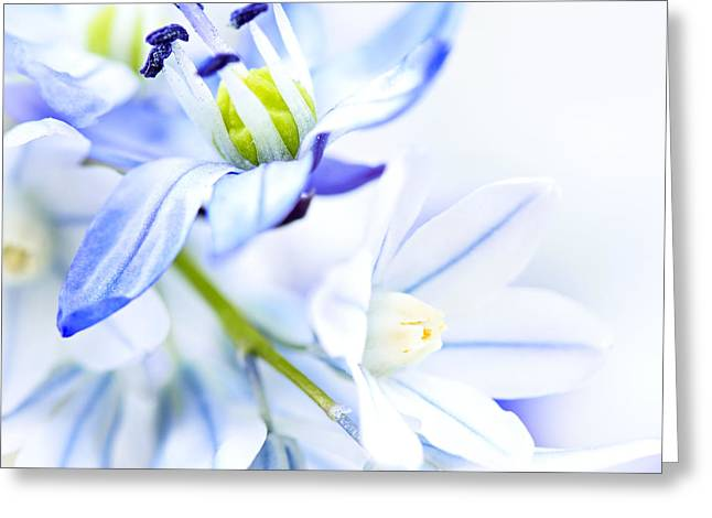 Gentle Petals Greeting Cards - First spring flowers Greeting Card by Elena Elisseeva