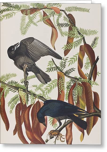 American Crow Greeting Cards - Fish Crow Greeting Card by John James Audubon