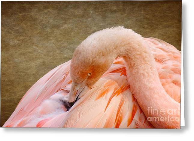 Plankton Greeting Cards - Flamingo Greeting Card by Mickey At Rawshutterbug