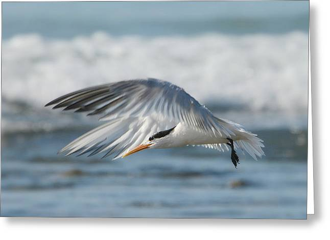 Flight Of The Tern Greeting Card by Fraida Gutovich