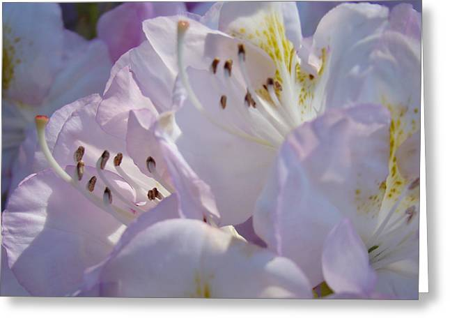 Pink Rhodies Greeting Cards - Floral Pastel art prints Nature Rhodies Rhodendrons Baslee Troutman Greeting Card by Baslee Troutman