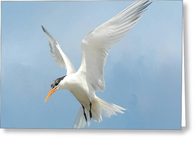 Tern Greeting Cards - Flutter 2 Greeting Card by Fraida Gutovich