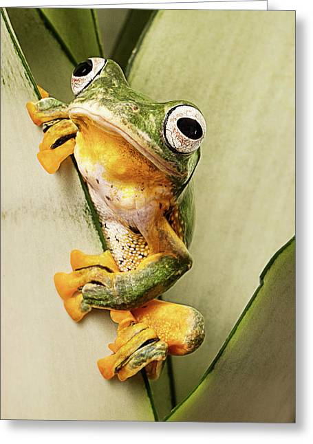 Flying Tree Frog Greeting Card by Linda D Lester