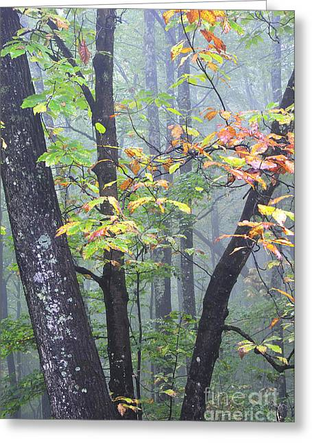 Monongahela National Forest Greeting Cards - Foggy Fall Forest Greeting Card by Thomas R Fletcher