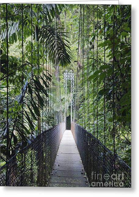 Confined Greeting Cards - Footbridge in Costa Rican Forest Greeting Card by Jeremy Woodhouse