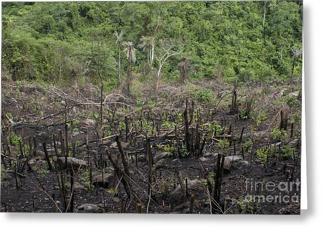 Forest Cleared For Firewood Greeting Card by Andrew Routh
