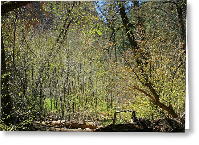 West Fork Greeting Cards - Forest of Light Greeting Card by Ellen Henneke